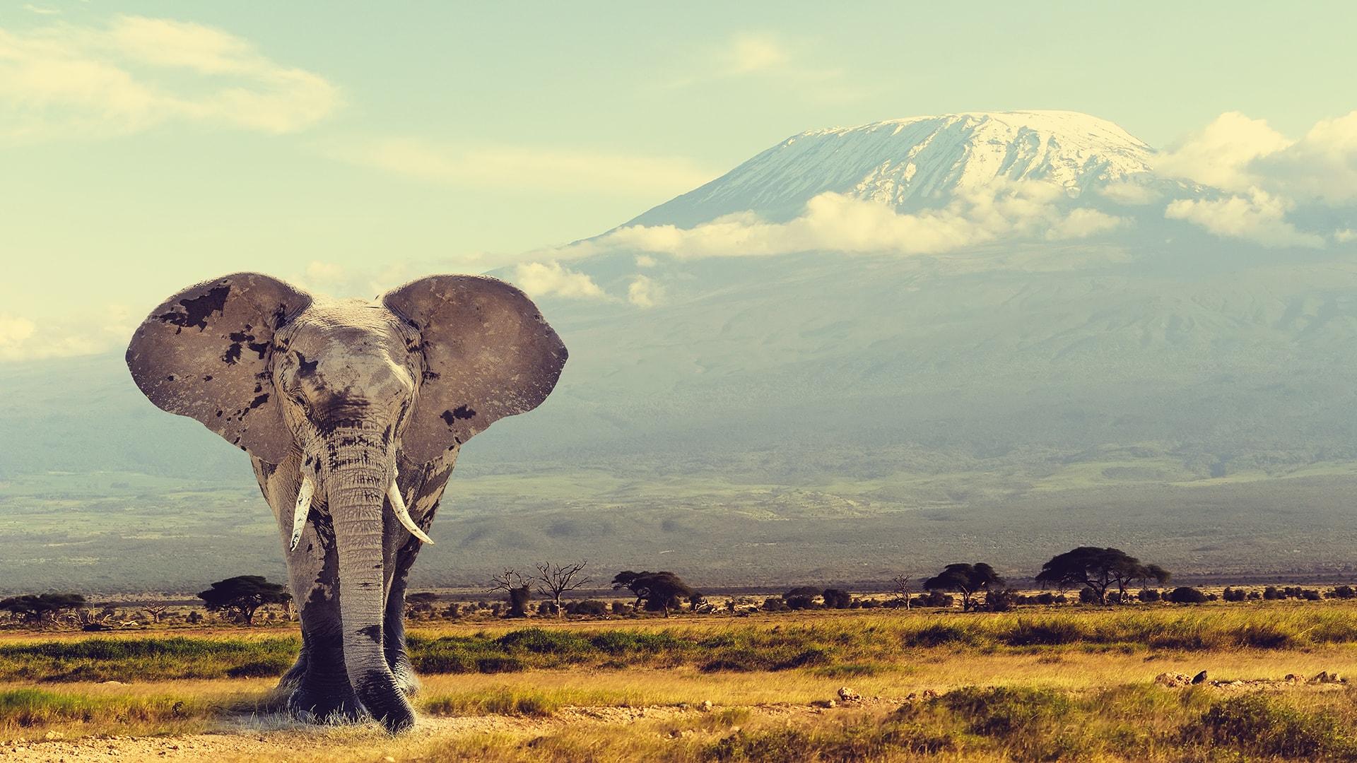 Viajes a media por África