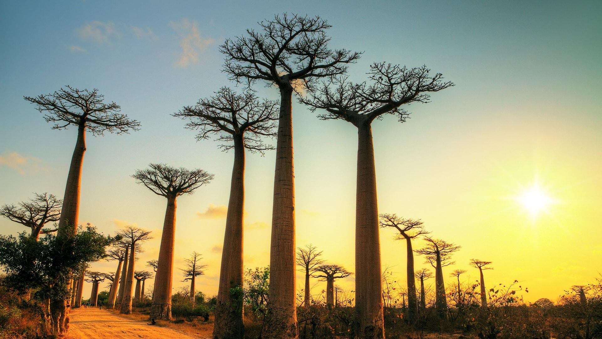 El paisaje de Madagascar