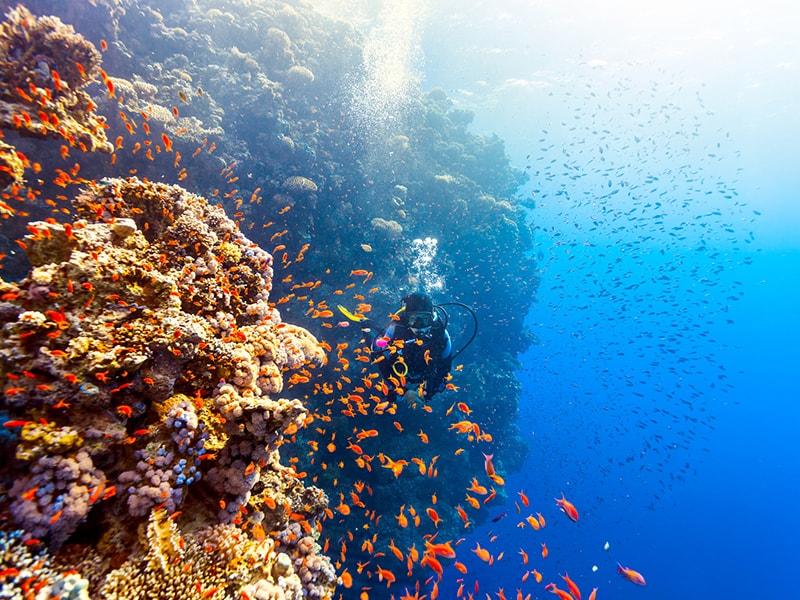 Egipto. Buceo en el Mar Rojo
