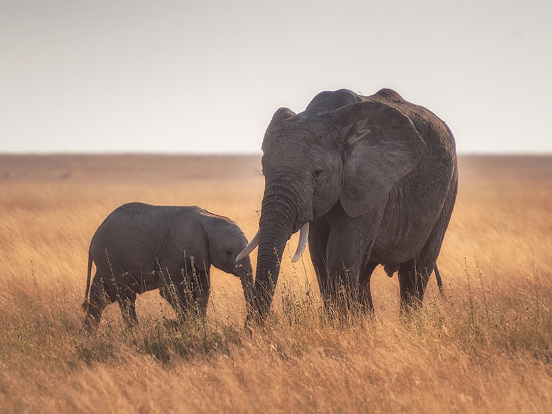 Namibia. Visitar el santuario de vida silvestre Shiloh