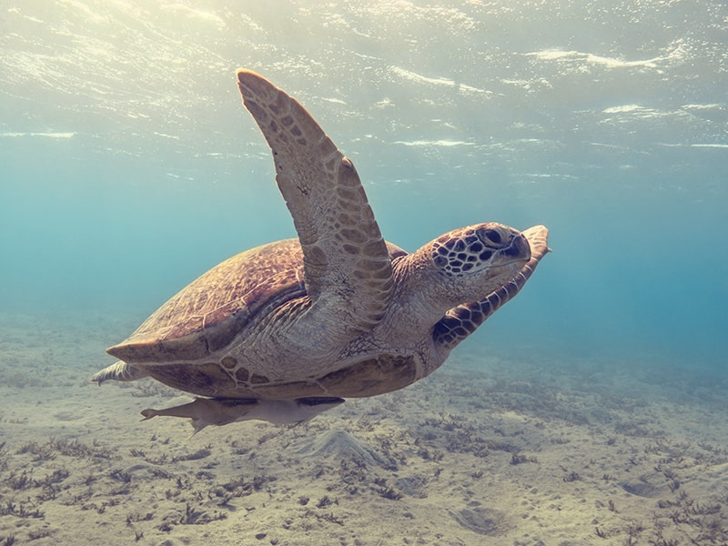 Omán. Observar cómo desovan las tortugas