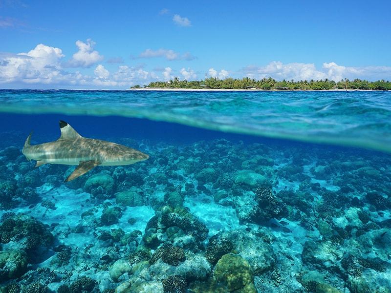 Polinesia. Surcar los mares del Sur