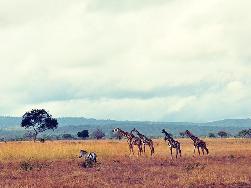 Tanzania. Safaris a pie