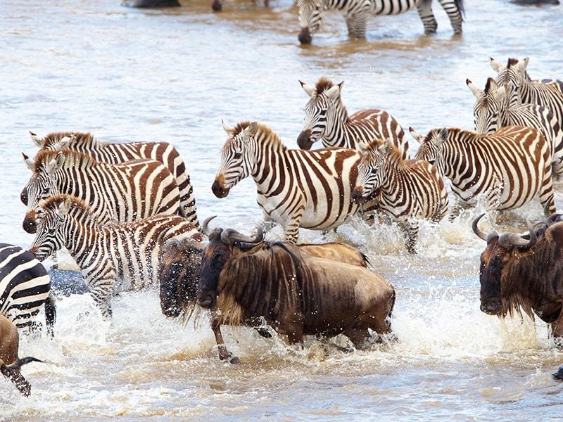 Tanzania. La migración del mundo salvaje