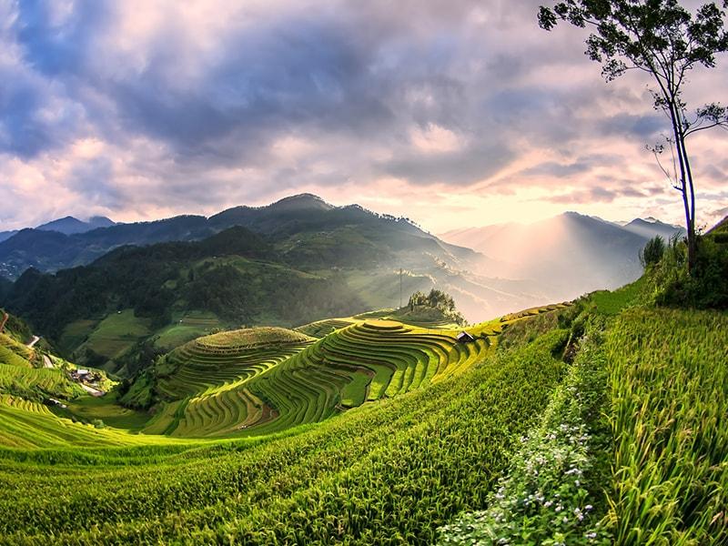 Vietnam. Recorrido en Sidecar por los arrozales