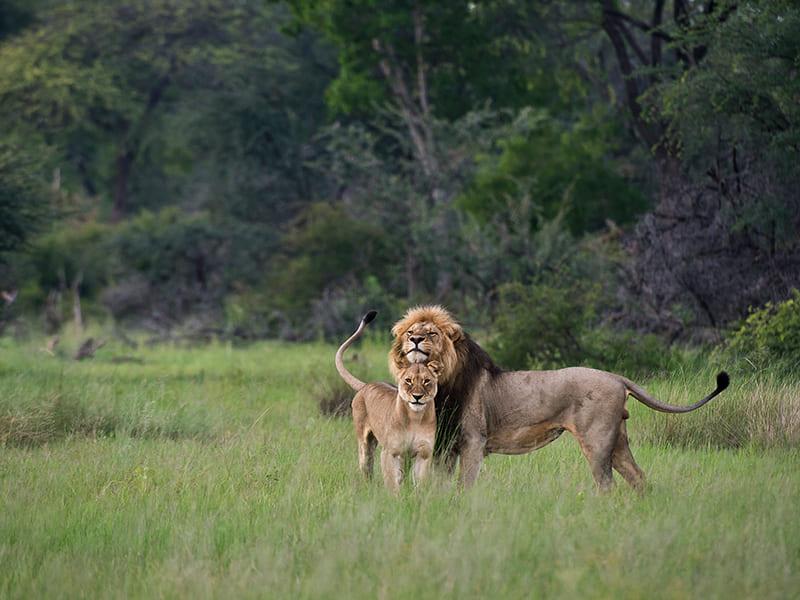 Zambia. Paseos guiados a pie