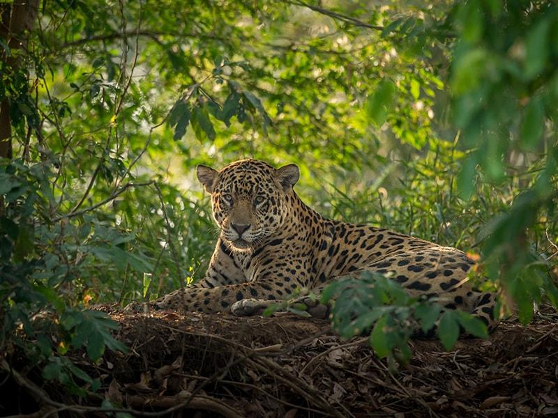 Brasil. Sobrevolar el Pantanal