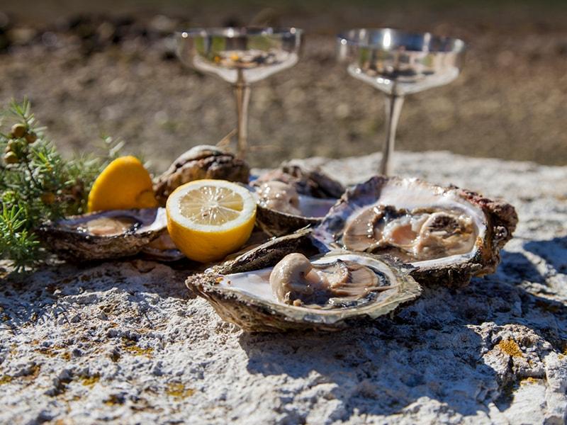 Croacia. Degustación privada de vinos